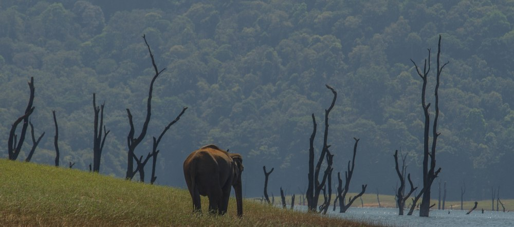 Periyar National Park wild elephant