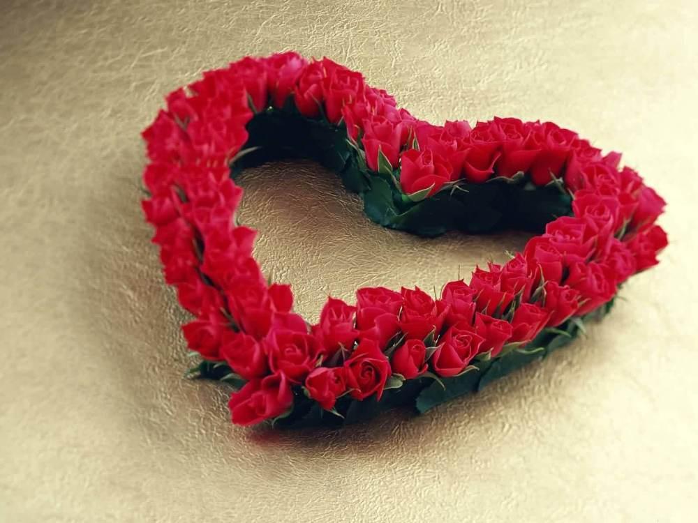 red-rose-image-9